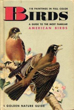 birds golden guide rh vintagepbks com Golden Books Guides Art Pictures Golden Field Guides